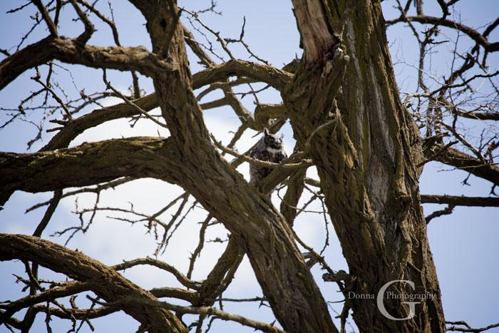 Momma Owl Smart Object-1